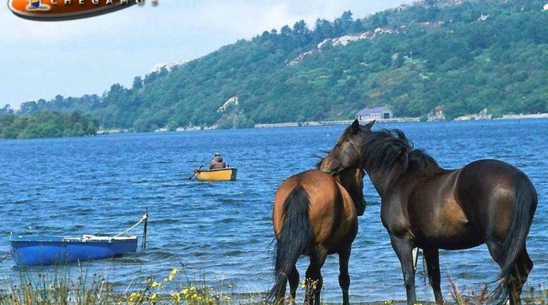 cavalos_papel_parede