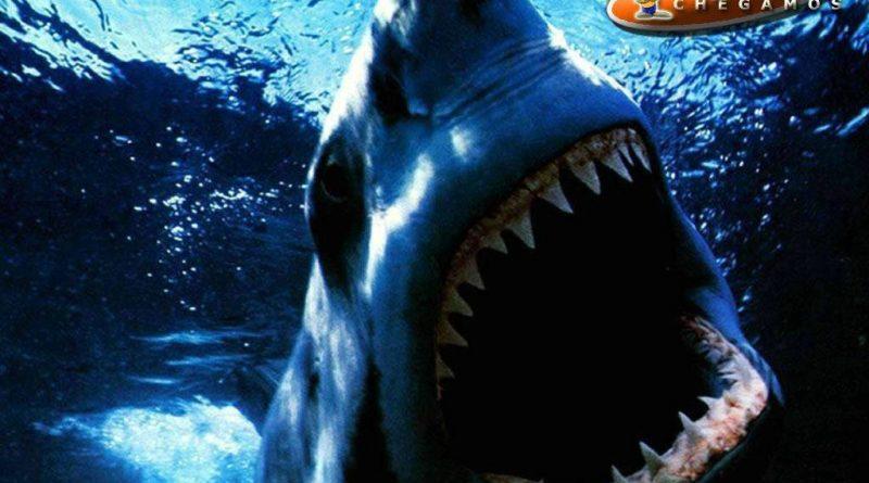 fotos tubarão