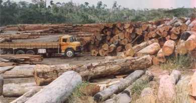 crimes ambientais na Amazônia